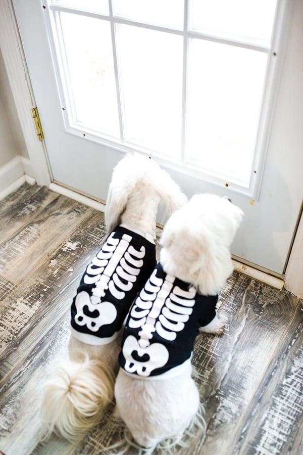 Skeleton Dog Halloween Costumes